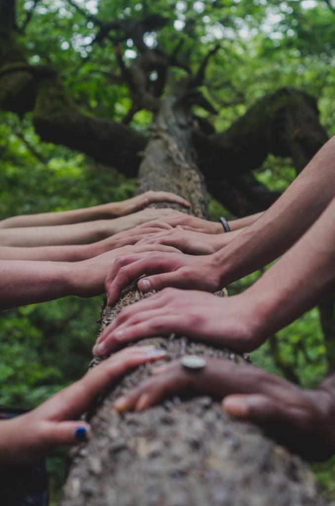 nine hands on a log
